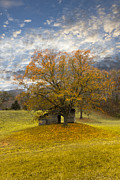 Tennessee Barn Prints - The Old Oak Tree Print by Debra and Dave Vanderlaan