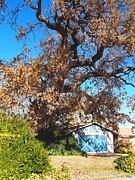Glenn McCarthy Art and Photography - The Old Oak Tree