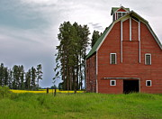 Yellow Trees Photos - The Old Red Barn by Karon Melillo DeVega