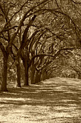 Old Roadway Metal Prints - The Old South Series in sepia Metal Print by Suzanne Gaff