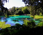 Dunnellon Photos - The Old Swimming Hole by Judy Wanamaker