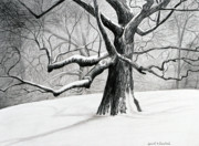 Winter Trees Drawings Posters - The Old Tree Poster by Bob Crawford