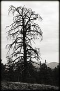 The Old Tree Print by Ricky Barnard