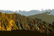 Olympic Mountains Framed Prints - The Olympic Mountains Framed Print by David Lee Thompson