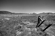 Barbed Wire Fences Acrylic Prints - The Open Pasture - Black and White Acrylic Print by Peter Tellone