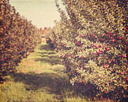 Apple Orchard Posters - The Orchard Poster by Lisa Russo
