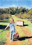 Fall Grass Drawings Posters - The Orchard Path Poster by Danielle Pearson