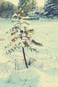 Snowstorm Art - The Ornamental Tree by Kerry Langel