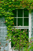 The Other Window Print by Lisa  DiFruscio