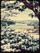 Dogwood Lake Framed Prints - The Overlook Framed Print by Darren Fisher
