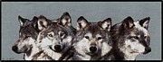 Wolf Photograph Mixed Media - The Pack by J McCombie