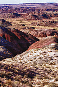 United States Art - The Painted Desert  8023 by James Bo Insogna