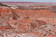 Arizona Art - The Painted Desert  8078 by James Bo Insogna