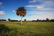 The Palmetto Tree Print by Susanne Van Hulst