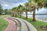 Lowcountry Prints - The Palms of Water Front Park Print by Scott Hansen
