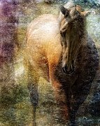 Filly Art Framed Prints - The Palomino Framed Print by Sue Fulton