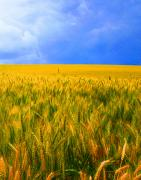 Fields Digital Art - The Palouse Wheat Fields by Margaret Hood