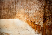 Winter Scene Digital Art Prints - The Path Less Traveled Print by Mary Timman