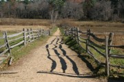 Split Rail Fence Digital Art Framed Prints - The Path Framed Print by Paul McCarthy