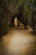 Robert Martin Metal Prints - The Path Metal Print by Robert Martin