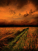 Horizons Framed Prints - The Path to Reclusivity Framed Print by Phil Koch