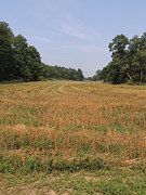 Amish Farms Photos - The Pattern of Crops in a Central Pennsylvania Field by JB Ronan