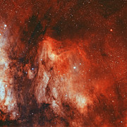 H Ii Regions Prints - The Pelican Nebula Print by Rolf Geissinger