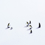 Soccer Art - The Penguins Playing Soccer by Ultra.f