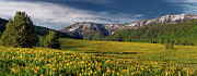 Expansive Framed Prints - The Perfect Mountain Meadow Framed Print by Leland Howard
