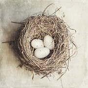 Shabby Chic Prints - The Perfect Nest Print by Lisa Russo