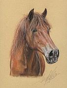 Friesian Art Prints - The Peruvian Paso Fino Mijo Print by Terry Kirkland Cook