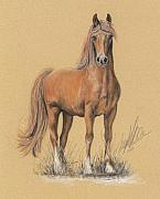 Equestrian Pastels - The Peruvian Paso Fino  by Terry Kirkland Cook