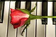 Black Rose Prints - The Piano Gift Print by Sophie De Roumanie