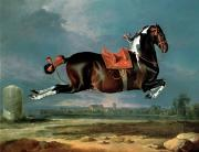 Saddle Metal Prints - The Piebald Horse Metal Print by Johann Georg Hamilton