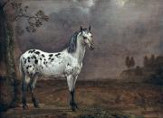 Pie Paintings - The Piebald Horse by Paulus Potter