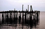 Pilings Prints - The pilings Print by David Lee Thompson