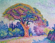 Pine Tree Framed Prints - The Pine Tree at Saint Tropez Framed Print by Paul Signac