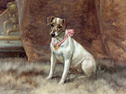 Jack Russell Terrier Posters - The Pink Bow Poster by Maud Earl