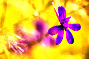 Colorful Photos Painting Prints - The pink flower Print by Odon Czintos