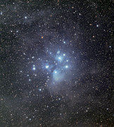Star Clusters Posters - The Pleiades Surrounded By Dust Poster by Phillip Jones