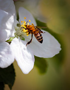 Stinger Prints - The Pollintor Print by Robert Bales