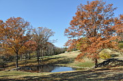 Cheekwood Prints - The Pond Print by Denise Ellis