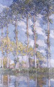 Impressionism Landscape Framed Prints - The Poplars Framed Print by Claude Monet