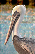 Pelicans Framed Prints - The Prince Framed Print by Debra and Dave Vanderlaan