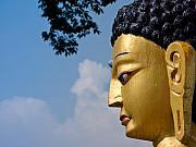 The Profile Of Buddha Print by Nila Newsom
