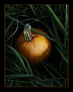 Pumpkin Digital Art Acrylic Prints - The Pumpkin Patch Acrylic Print by Ron Jones