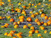 Jack-o-lanterns Photos - The Pumpkin Patch by Sharon  Talson