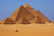 Camels Prints - The pyramids in Egypt Print by Dan Breckwoldt