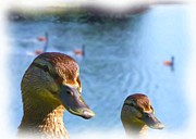 Digital Photograph Digital Art - The Quackers by Garry Staranchuk