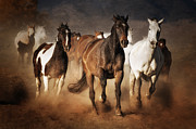 Horse Herd Photo Prints - The Race Print by Heather Swan